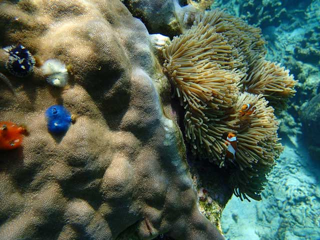 Coral and anemones in Thailand