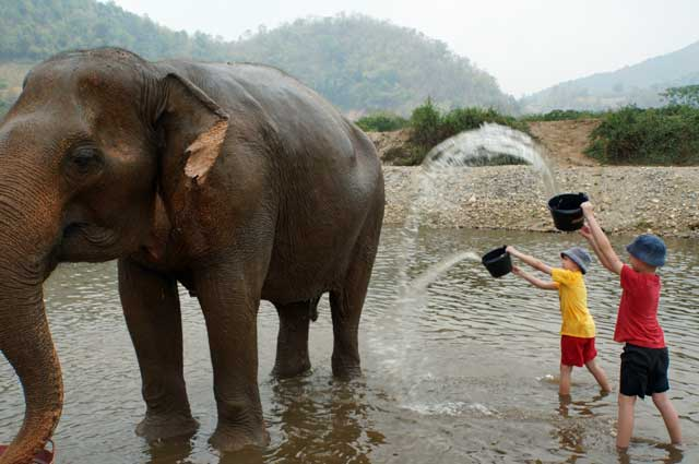 Our boys washing an elephant in the river at Elephant Nature Park