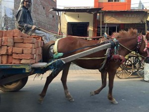 A horse and cart in India