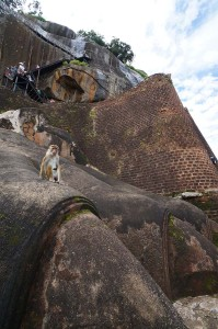 Monkey at Sigiriya
