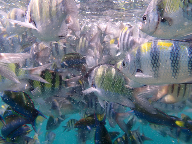 Snorkelling with fish in Thailand