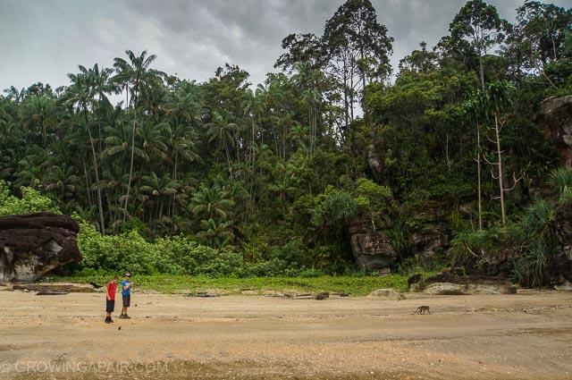 Borneo beach at Bako National Park, Borneo, Malaysia