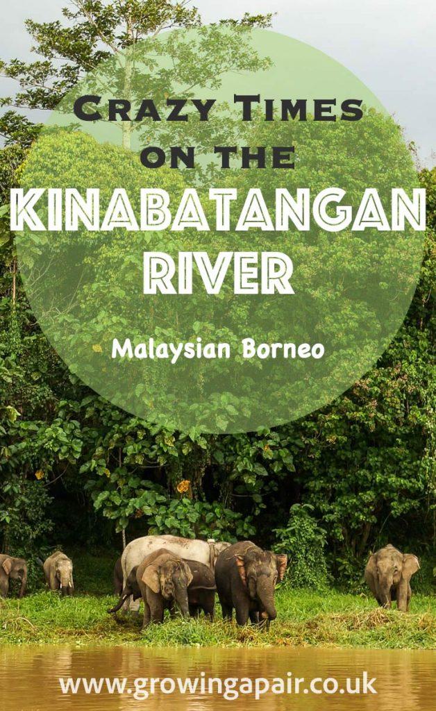 Kinabatangan river safari, Borneo, Malaysia
